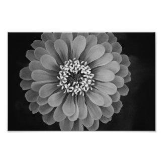 Pure Nature Photographic Print
