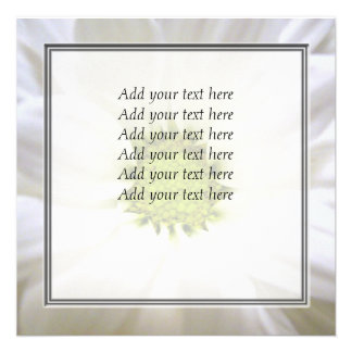 pure white daisy flower personalized announcements