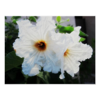Pure White Hibiscus Flowers Poster