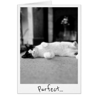 Purfect Kitty Greetings Card