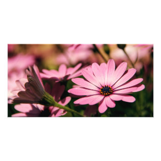 Purple African Daisy Customized Photo Card