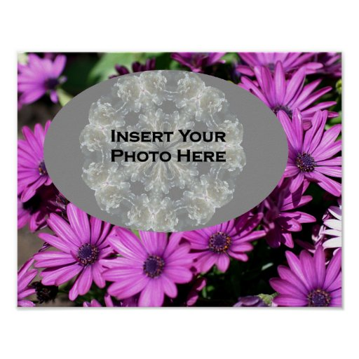 Purple African Daisy Flowers Your Photo Poster