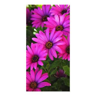 Purple African Daisy Photo Card