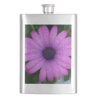 Purple African Daisy with Raindrops Hip Flask