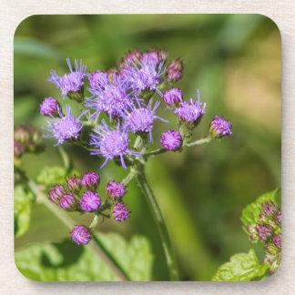 Purple Ageratum Wildflowers Coaster