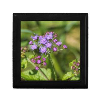 Purple Ageratum Wildflowers Gift Box