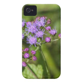 Purple Ageratum Wildflowers iPhone 4 Case-Mate Cases