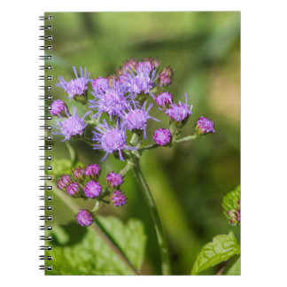 Purple Ageratum Wildflowers Notebook