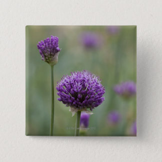Purple Alliums with natural diffused background 15 Cm Square Badge