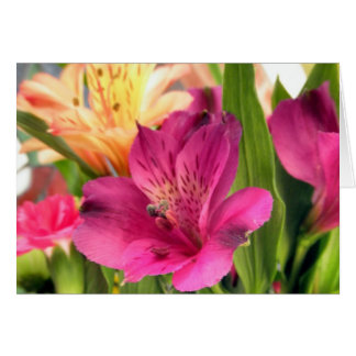 Purple Alstroemeria Flower Lilies Flowers Photo Card