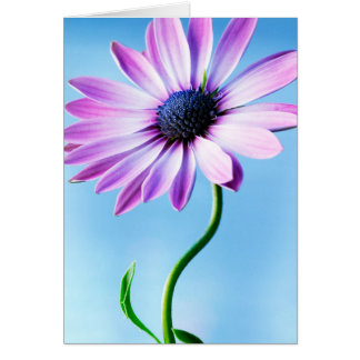Purple and Blue Daisy Flower Floral Daisies Flower Card