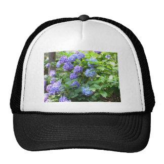 Purple and blue Hydrangea flowers Cap