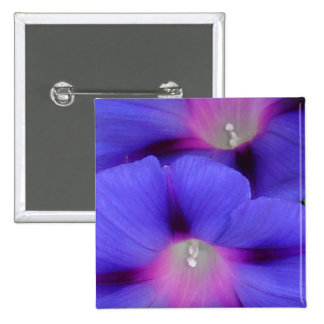 Purple and Pink Colored Morning Glory Flowers Clos Buttons