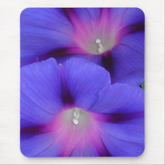 Purple and Pink Colored Morning Glory Flowers Clos Mouse Pad
