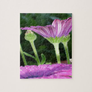 Purple And Pink Daisy Flower in Full Bloom Jigsaw Puzzle