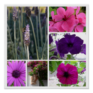 Purple and Pink Flowers Poster