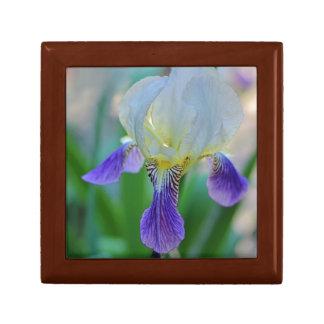 Purple and White Iris Gift Box
