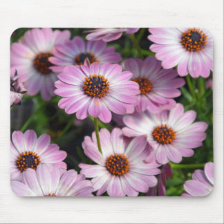 Purple and white osteospermum flowers mousepads