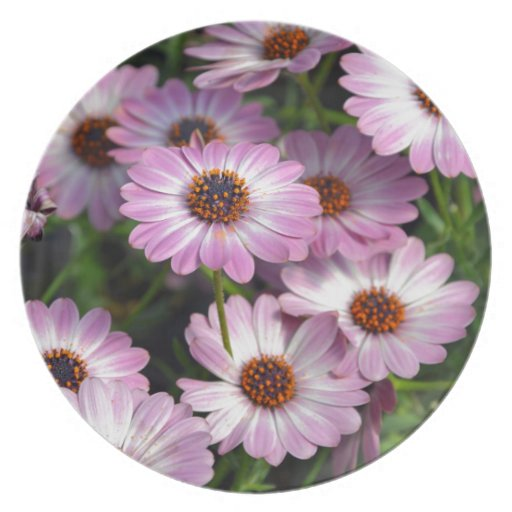 Purple and white osteospermum flowers party plate