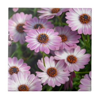 Purple and white osteospermum flowers small square tile