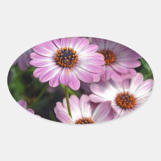 Purple and white osteospermum flowers oval sticker