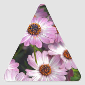 Purple and white osteospermum flowers triangle sticker