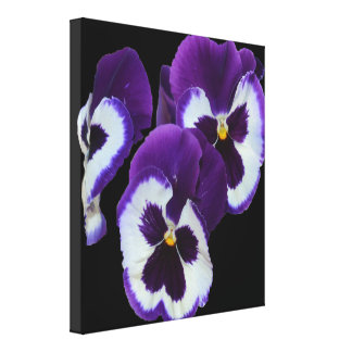Purple And White Pansies On Black Background, Canvas Print