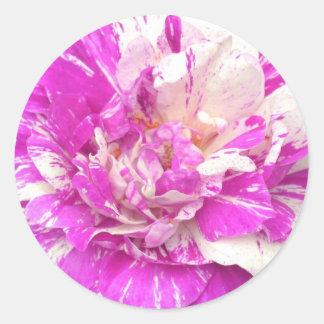Purple and White Rose Sticker
