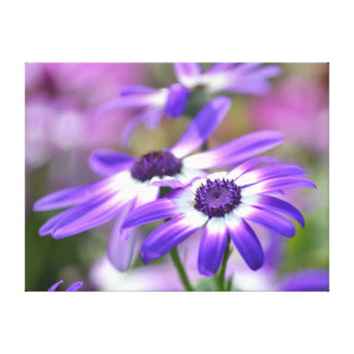 Purple and White Spring Flowers Stretched Canvas Prints