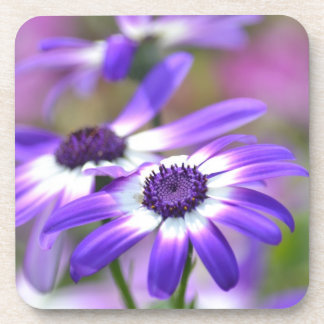 Purple and White Spring Flowers Beverage Coasters