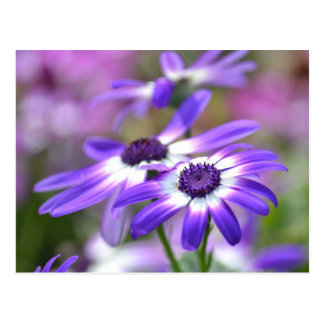 Purple and White Spring Flowers Postcard