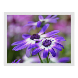Purple and White Spring Flowers Poster