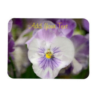 Purple and White Violas by Shirley Taylor Magnet