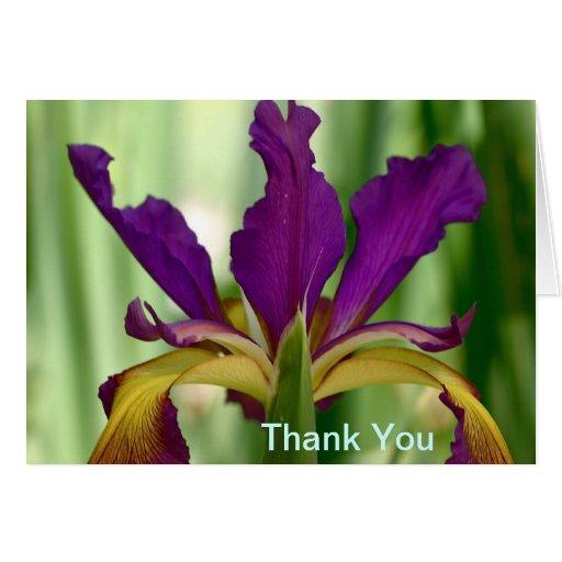 Purple and Yellow Multi-colored Iris Greeting Card