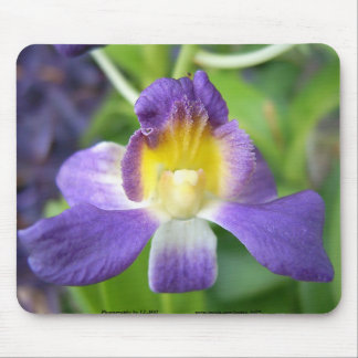 Purple and Yellow Orchid Mouse Pad