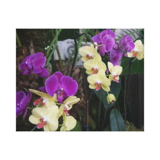 Purple and Yellow Orchids Canvas Canvas Print