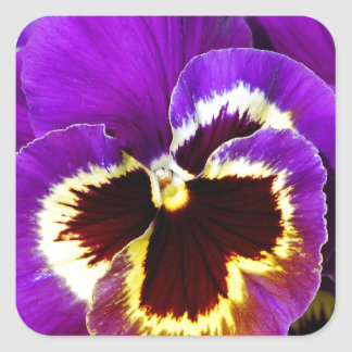 Purple and yellow pansy flower square sticker
