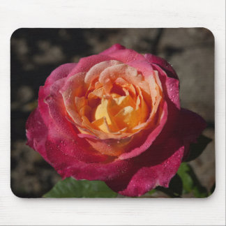 Purple and Yellow Rose Mouse Pad