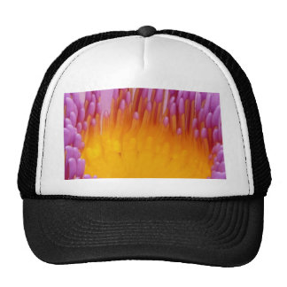 Purple and Yellow Water Lily Abstract Art Mesh Hats