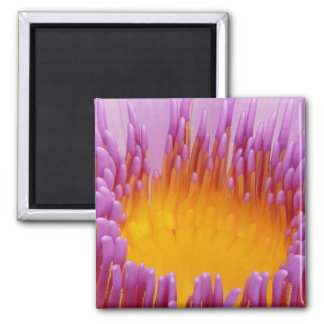 Purple and Yellow Water Lily Abstract Art Fridge Magnet