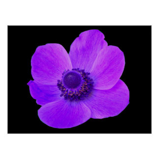 Purple Anemone Postyer Poster