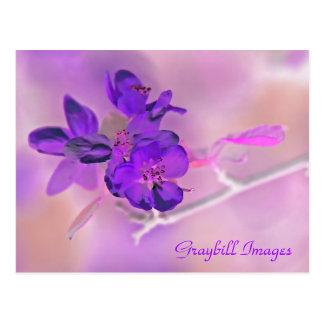 Purple Apple Blossom Postcard