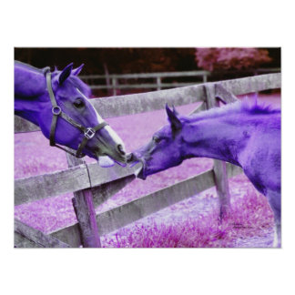 Purple arabian foal & quarter horse Poster