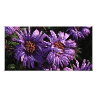 purple asters after the rain photo cards