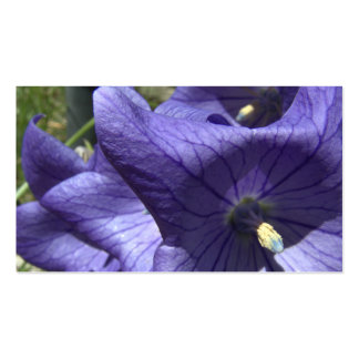 purple balloon flower pack of standard business cards