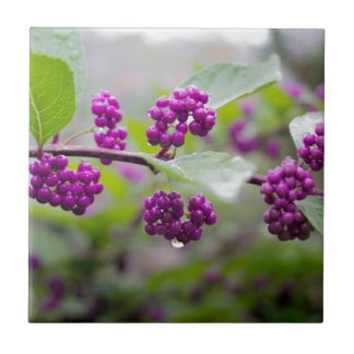 Purple Berries Tile