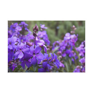 Purple Blossoms Stretched Canvas Print