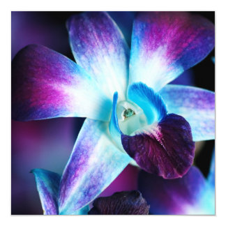 Purple & Blue Dendrobium Orchid Customized Orchids Card
