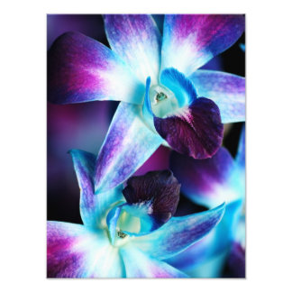 Purple & Blue Dendrobium Orchid Customized Orchids Photo
