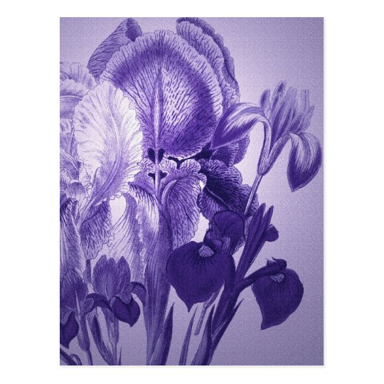 Purple Botanical Postcard